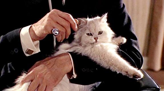 villain cat2