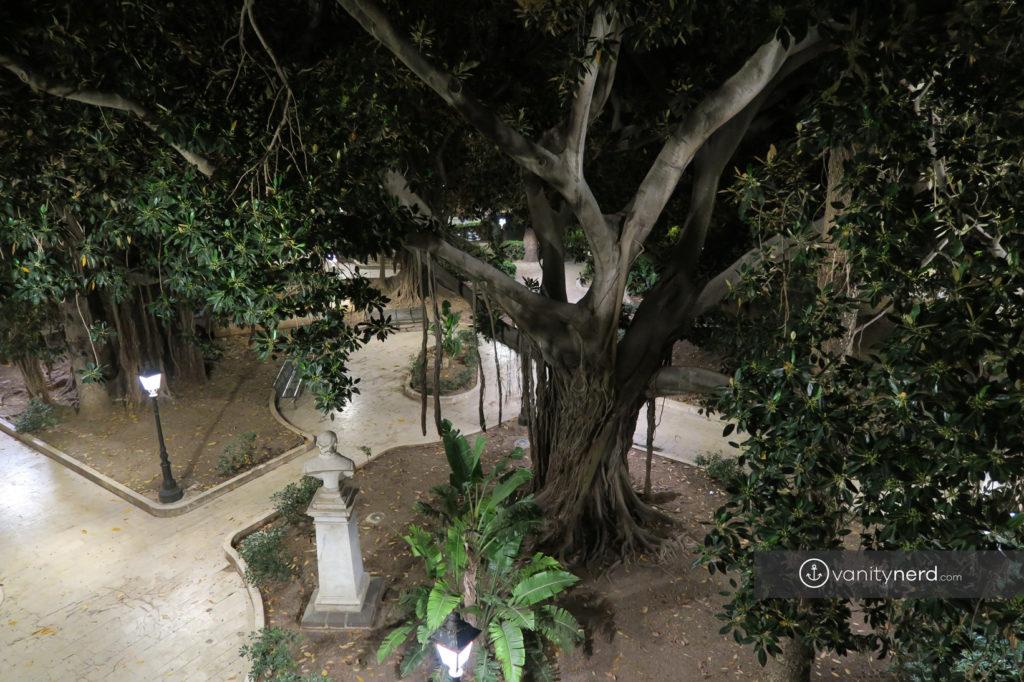 ficus_magnolia_ortigia