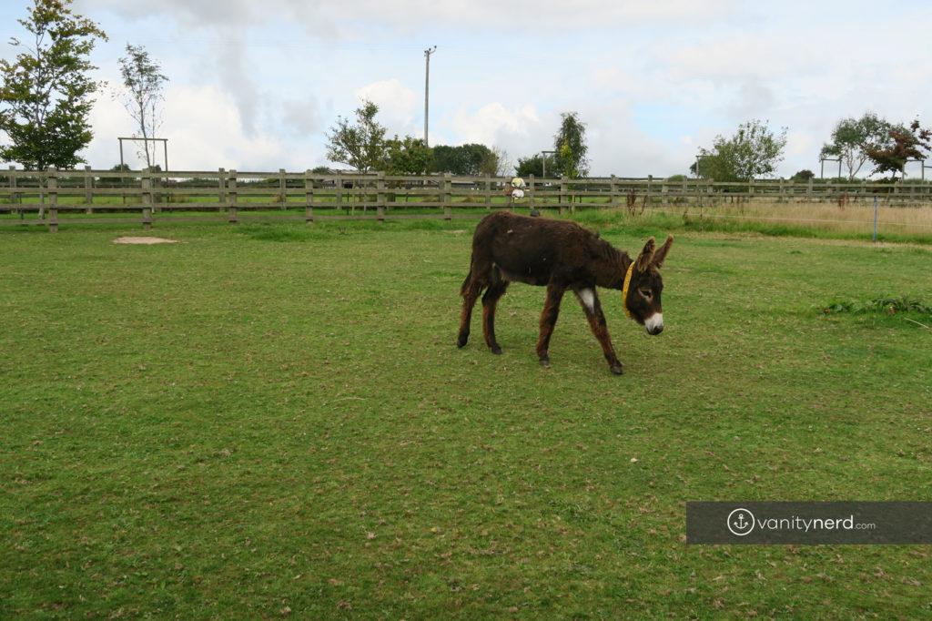 Donkey Sanctuary UK