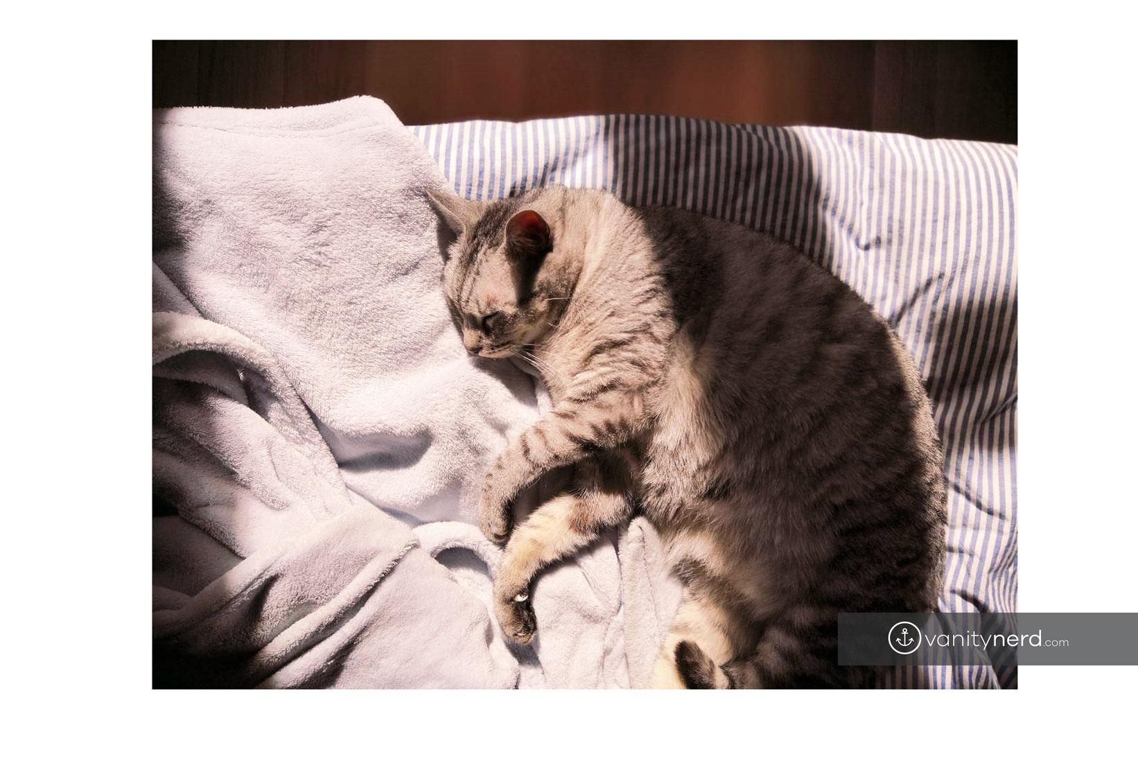ASMR gatto dorme